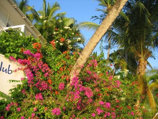 L'île d'Antigua