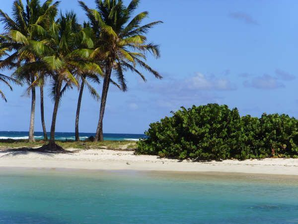 Grenadines Mayereau