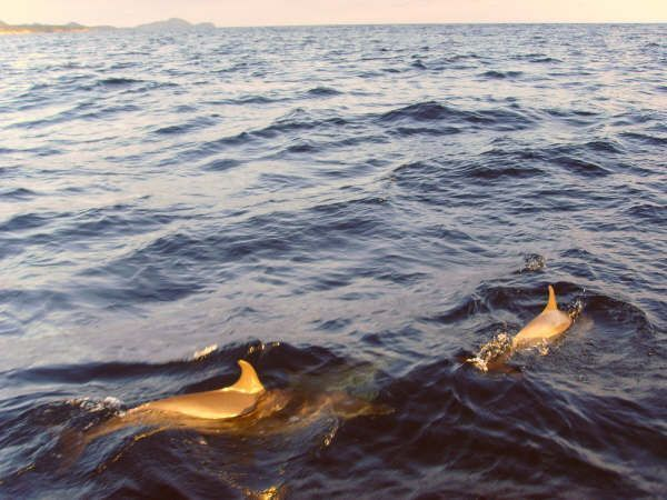 Croisiere catamaran Antilles : A bord du Lavezzi e